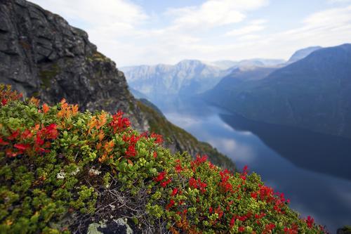 Et fint høstbilde fra Ljøbrekka, som ligg rett ved Hellesylt. Her ser vi Synnylvsfjorden i bakgrunnen.