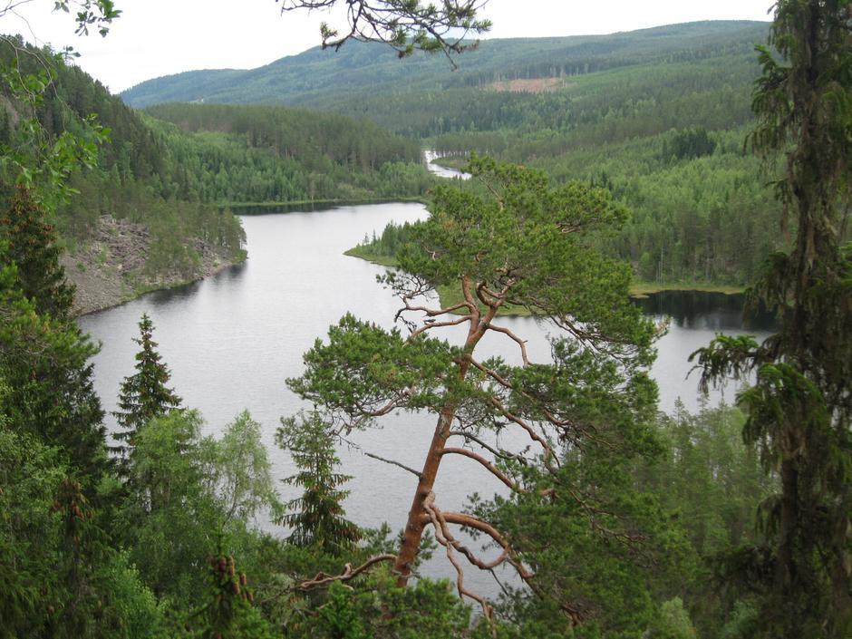 Finnskogen Rotnadalen