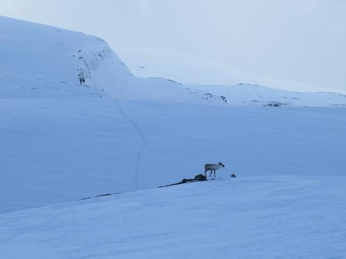 Is- og snømelding for fjellet