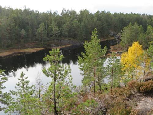 Igletjenn i Landsverkskog.
