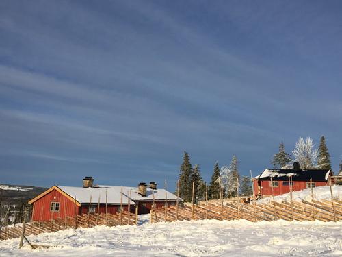 Uke 46: Skiløyper på Hedmarksvidda: Budor anbefales denne helgen