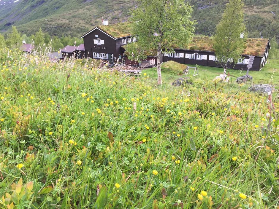 Sommerlig og fint ved Skogadalsbøen i slutten av juni 2017