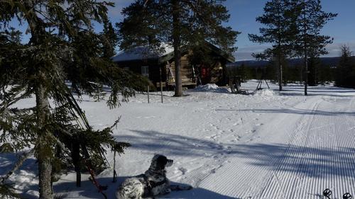 Skitur ved Vollkoia og til Blåmyrkoia 26.02.2020.