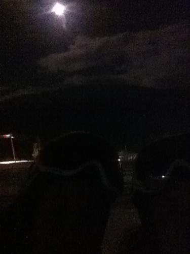 Måneskinnstur i Hodlekve