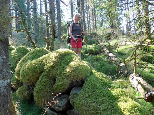 Vi går i skog ned mot Håheim