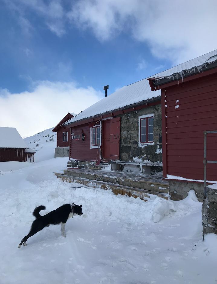 Fredag 26.2: Hallingskeid. Nok snø til god skiopplevelse. Det er kvistet fra Hallingkskeid til Finse.
