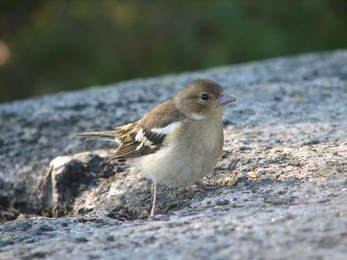 Fugletittetur på Mølen søndag 10. april.