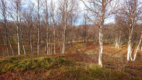 Høst i Tønsvikdalen