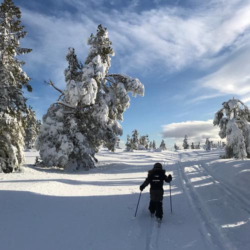 Takk for deltakelse i årets Turposter på ski!