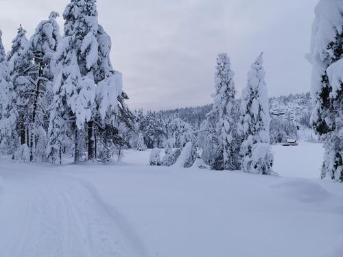Føremelding uke 1: Finnemarka