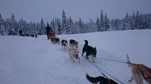 Hundesledetur på Sjåmoen 19. feb
