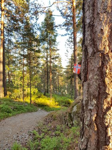 Norsk flagg i marka