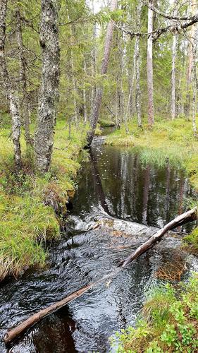 skoglandskap, bilde er ikke fra turen