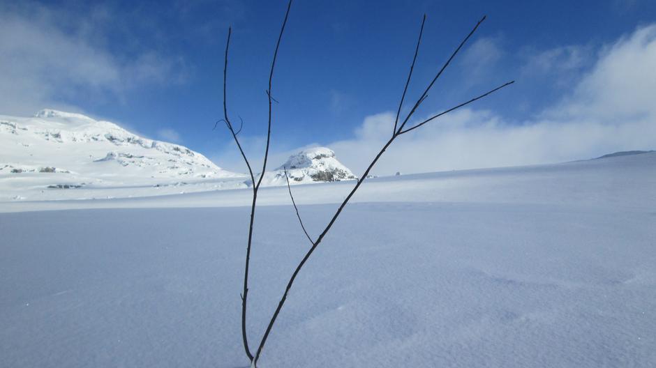 Lørdag 18.3: Såta (1558 moh) i bakgrunnen. Kvistet løype Hallingskeid - Geiterygghytta