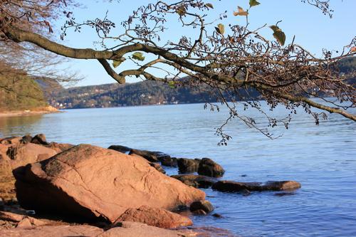 Finn roen langs kyststien ved Svelvik