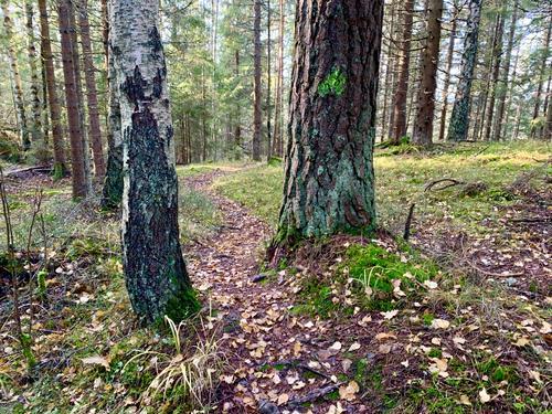 Novemberskog - Østmarka