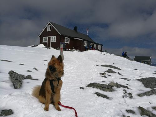 Turtips: Turtagrø- Fanaråken Turisthytte