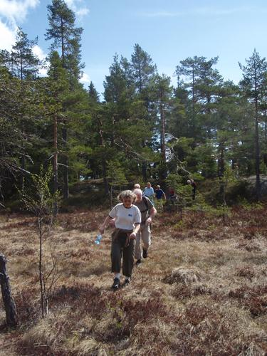 Breimåsan, foto Jan Martin Larsen