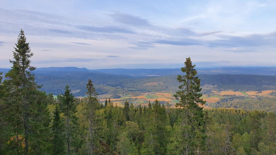 Utsikt mot Somdalskollen i bakgrunnen og Veme foran.
