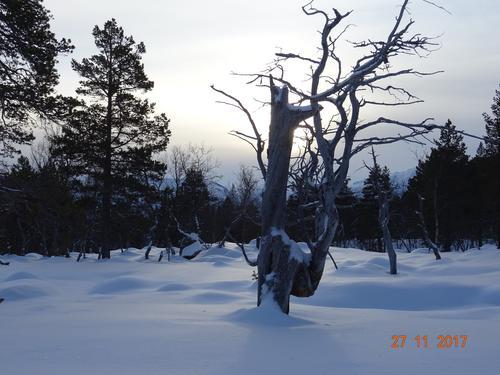 Lærdal Turlag ynskjer alle ei riktig god jul og eit fredfullt nytt år!