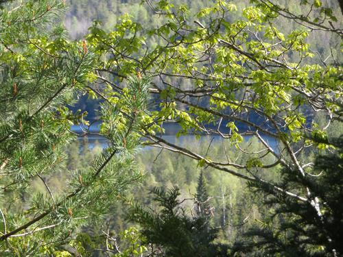 Blanda skog mot Trollvatn.