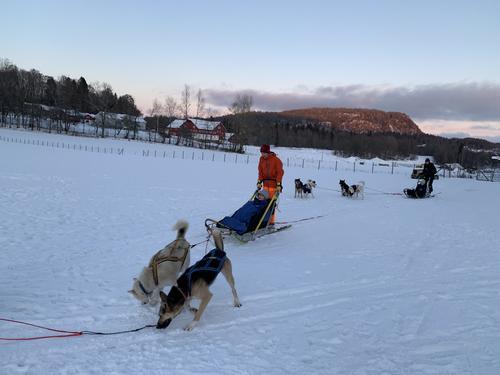 Hundekjøring på Bergvang gård