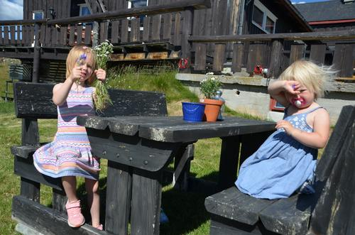 Vi plukker blomster