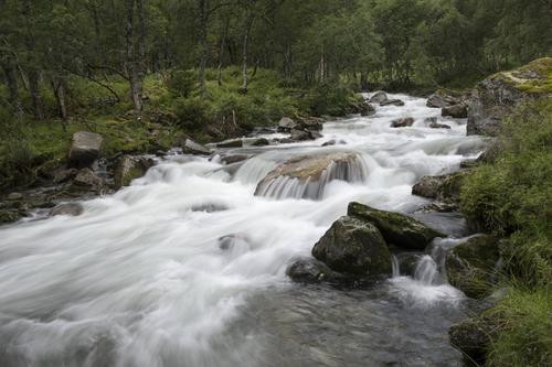 DNT får miljøvernpris