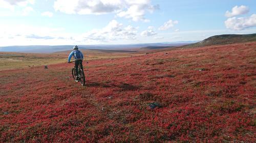 Høstfarger på Finnmarksvidda