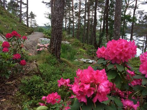 Blomstring i Rex Garden