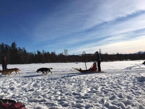 Hundekjøring med Norway Husky Adventure 2017