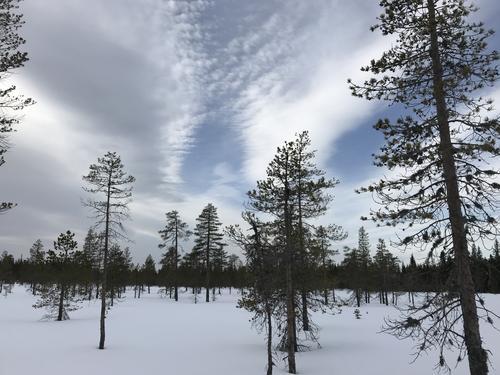 Skitur ved Vollkoia og til Blåmyrkoia 27.02.2019.
