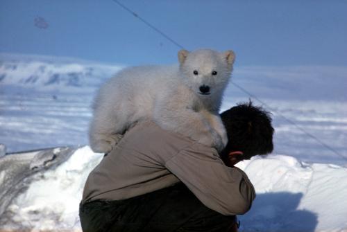 Åpent turmøte om et isbjørnliv, torsdag 19. november