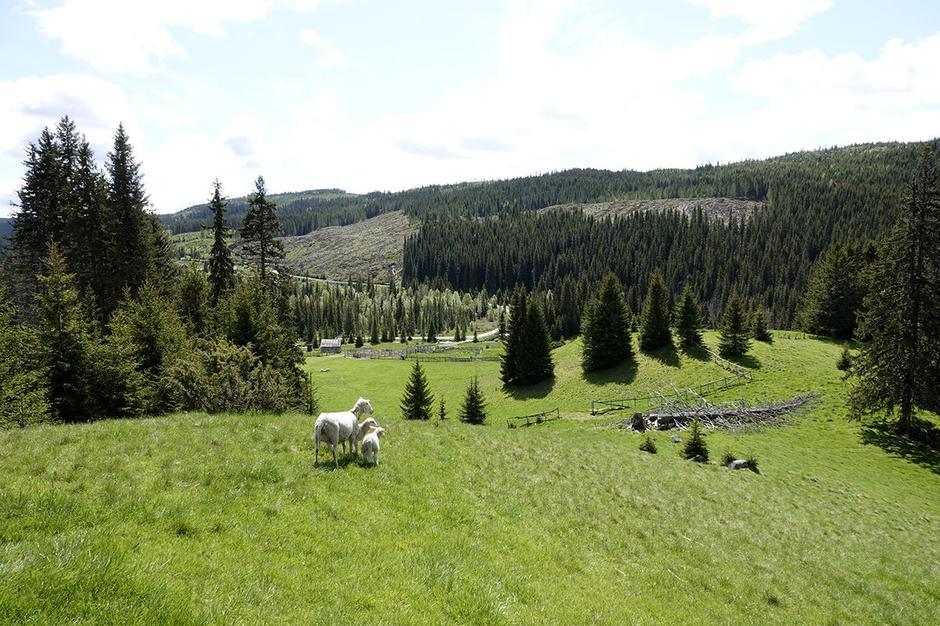 KULTURLANDSKAP: Deler av Totenåsstien går gjennom landskap formet av sæterdrift.