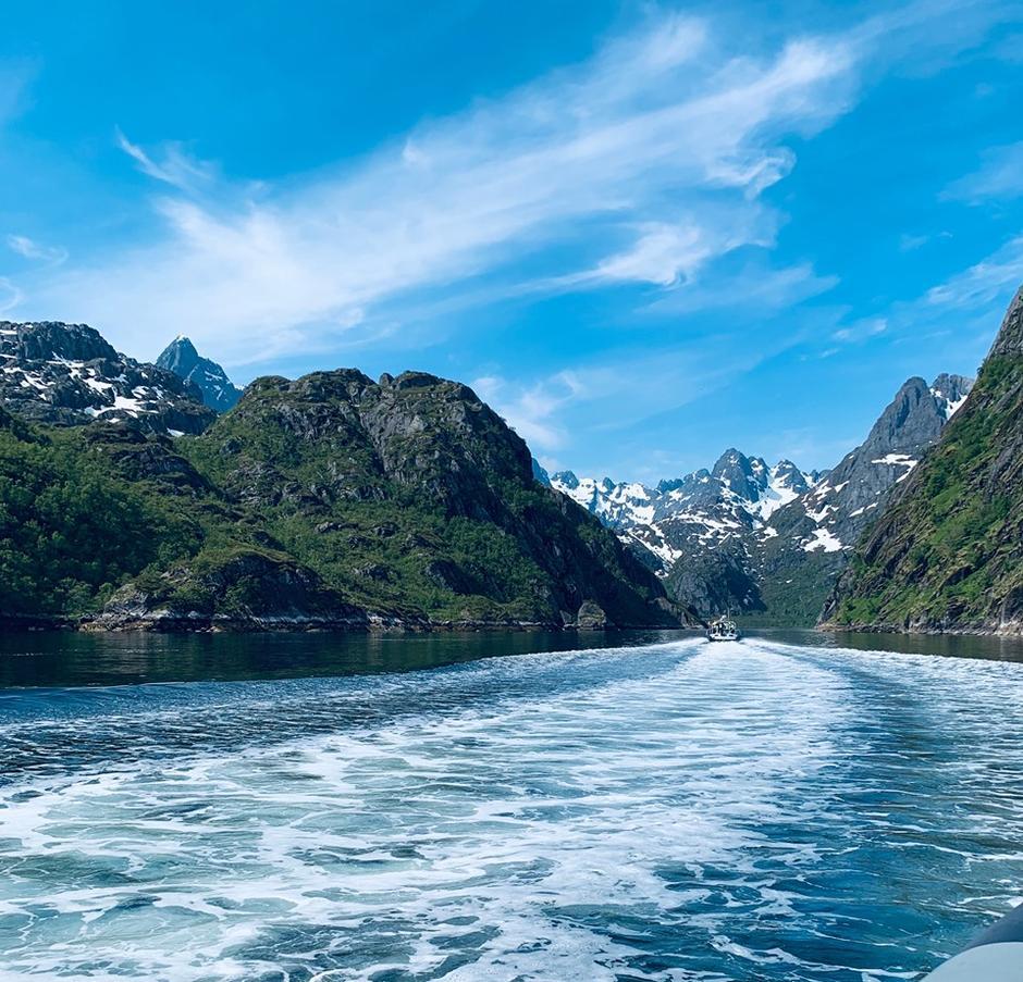 Trollfjorden på ørnsafari