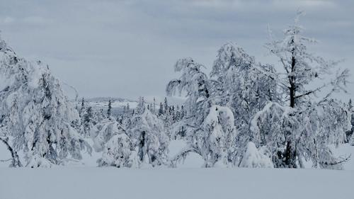 Skitur  fra/ved Vollkoia  30.01.2019.
