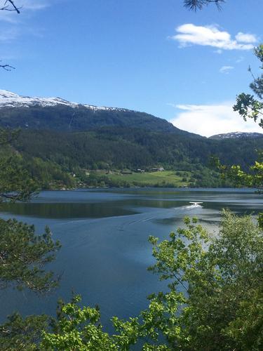 Vakkert og frodige Hardangerfjorden tatt i Ulvik!