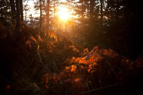 Høst i Østmarka