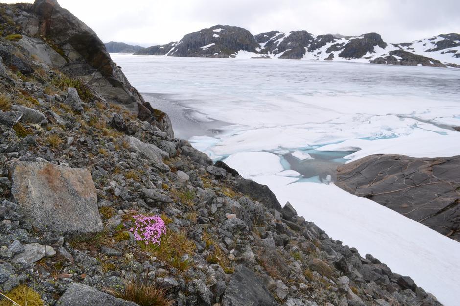 18. Juni 2017 Blåsjø fra Oddatjørndammen. Sommeren tar grep