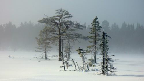 Tur til Vollkoia/Blåmyrkoia 15.02.17