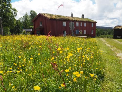 Blomsterprakt på Svukuriset tidlig på sommeren.
