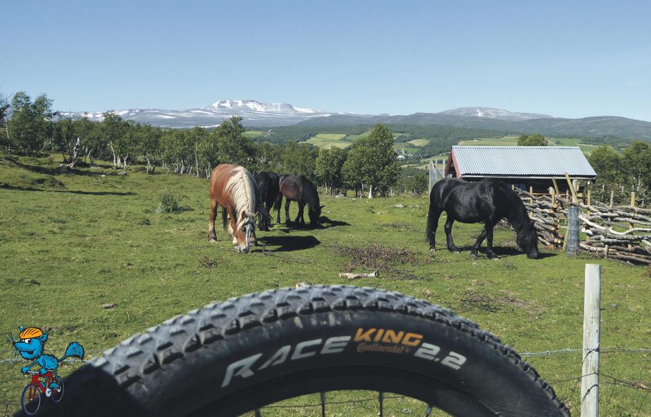 Sykkelturen i Leverdalen byr på seteropplevelser med dyr på beite