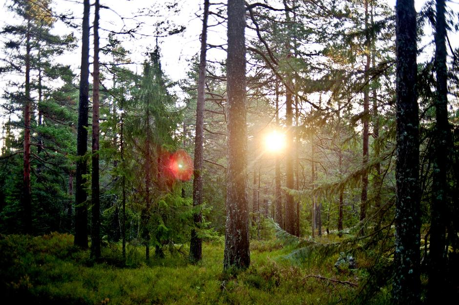 DYPE SKOGER: Opplev skogfinnenes kulturhistorie i mystisk og magisk kulturlandskap.