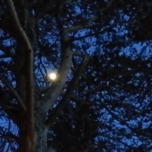 Måne natt