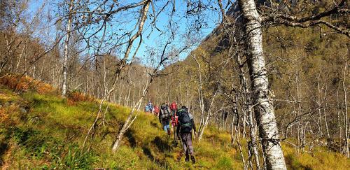 Høsten tar grep om trærne i Norddalen.