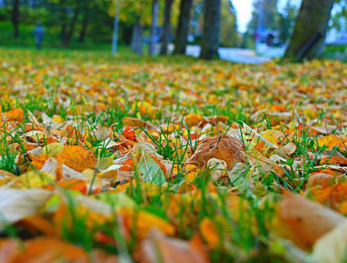 Temaet er høstblader