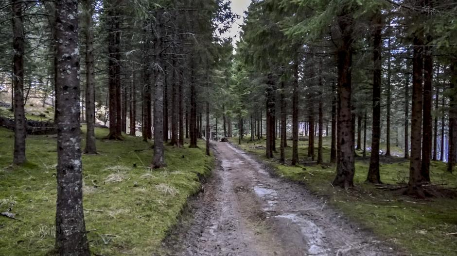 I Høgåsen finner man den hemmelige skogen. Kanskje ser dere noen tusser eller troll på turen?