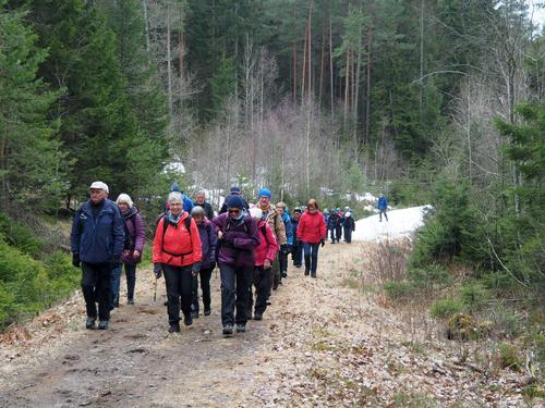 På kryss og tvers i Hafslundskogen