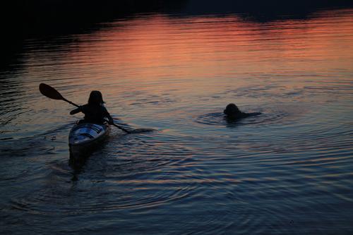 Solnedgang i Botneparadiset. Natalie og hunden Noah koser seg ute i vannet. Natalie i en kajakk og Noah som svømmer etter.