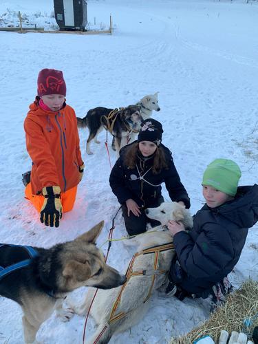 Hundekjøring Bergvang